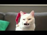 С Новым годом!Кот поёт извесную песню