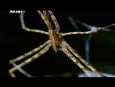 Войны жуков гигантов Monster bug wars Смертельная дуэль
