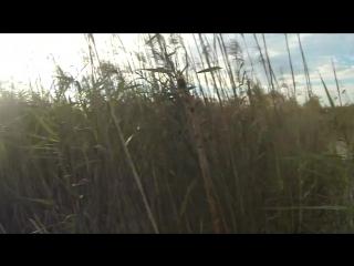 Охота на утку 30 августа