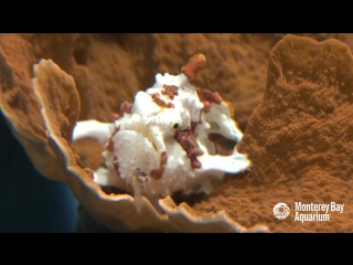 Let the Warty Frogfish Lure You In