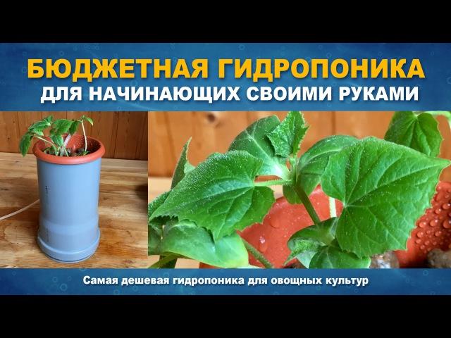 САМАЯ ДЕШЕВАЯ ГИДРОПОНИКА - Гидропоника для овощей за 15 минут своими руками.