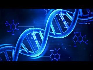 2. Химия клетки - Нуклеиновые кислоты, ДНК (9 класс) - биология, подготовка к ЕГЭ и ОГЭ