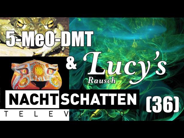 5-MeO-DMT und Lucys Rausch | Nachtschatten Television (36)