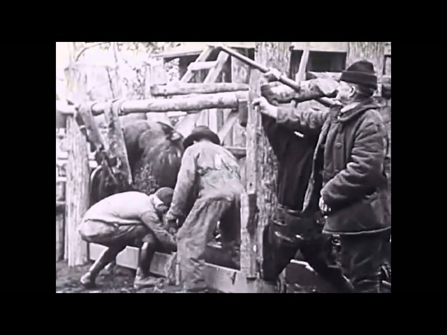 Валка лесных гигантов. США, 1923 год - Документальное видео » Freewka.com - Смотреть онлайн в хорощем качестве