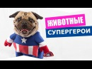 Животные обладающие суперспособностями Интересное видео про животных животные супергерои