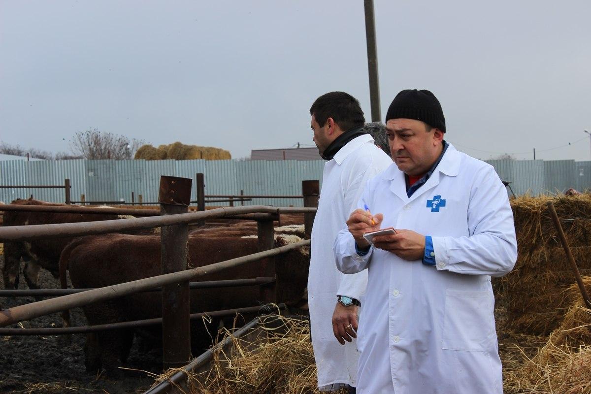В одном из хуторов Ростовской области введены карантинные ограничения по бруцеллезу крупного рогатого скота