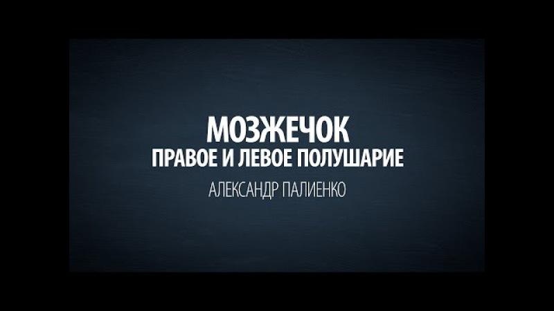 Мозжечок. Правое и левое полушарие. Александр Палиенко. » Freewka.com - Смотреть онлайн в хорощем качестве