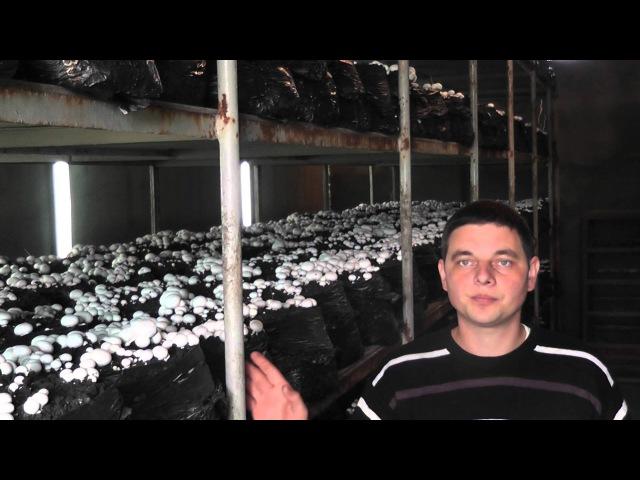 Как заработать на грибах в домашних условиях в промышленных масштабах 1 я часть