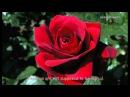 ERNESTO CORTAZAR - El Dia Que Me Quieras(romantic piano)