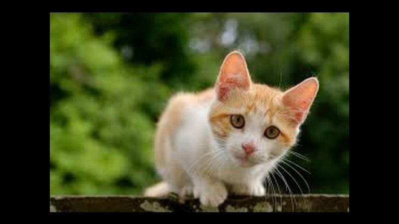 Какова Кошачья Жизнь и Животный Мир в Англии