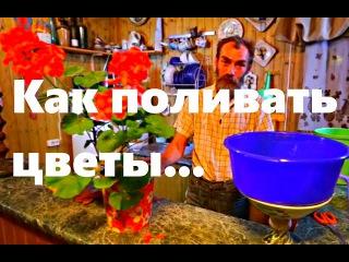 Как поливать цветы если вас нет дома.Телеканал Бобёр ТВ.