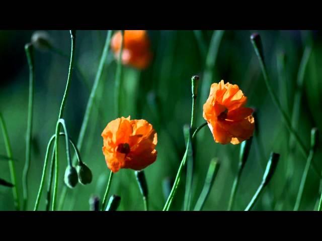 цветы это так красиво релакс
