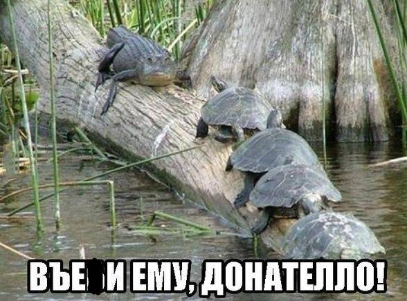 http://cs628628.vk.me/v628628680/1fae6/QoM7xjCt870.jpg