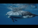 Голубые Багамы (4 серия из 6)  04_Open Water