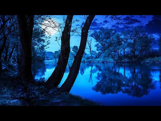 Soothing Night Time Forest Sounds - 2 Hour Ambient Soundscape - For Sleep Relaxation