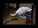 коты и опасные огурцы!