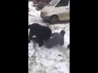 Собака карает алкашей. Пиздец тs че меня выебать решил? Порно прикол