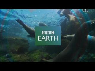BBC: Пингвины. Шпион в стае 2 Первые шаги (2013)