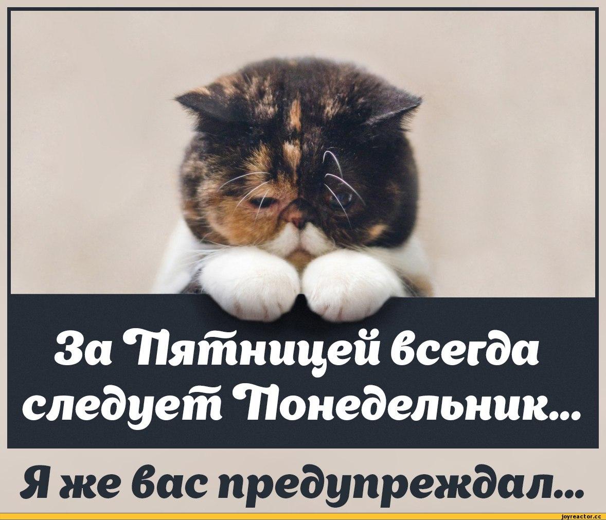 Прокуратура завершила первый этап следствия по трагедии на Грибовичской свалке, - Луценко - Цензор.НЕТ 3110
