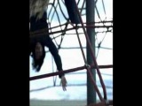 Schiller mit Heppner - Dream Of You