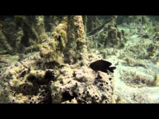 Голубые Багамы - Кораллы