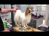 Papillon Grooming new line products