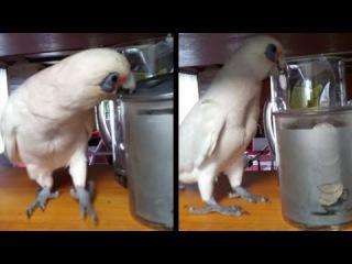 Eric Is A Douchebag! Here's A Bird Throwing A Temper Tantrum