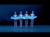 Танец маленьких лебедей по фински