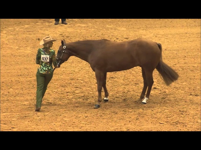 Martha Lou Oltjen - Credit Rate - 2012 AQHA Select World Show