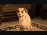 Dog smears poop EVERYWHERE