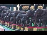 Слоны бегают наперегонки в Непале