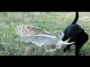 Закадычные друзья Кот и Сова / Unbelievable friendship cat and owl