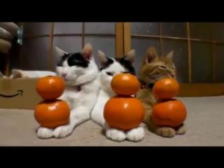 Самые неадекватные коты. Смешное поведение кошек (подборка 2015)