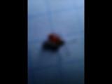 Нашли над чем поржать))))))))Красный таракан на белой бумаге)))))))))