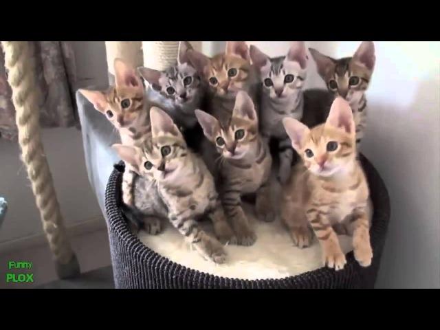 Коты И Собаки! Смешная Видео Подборка!
