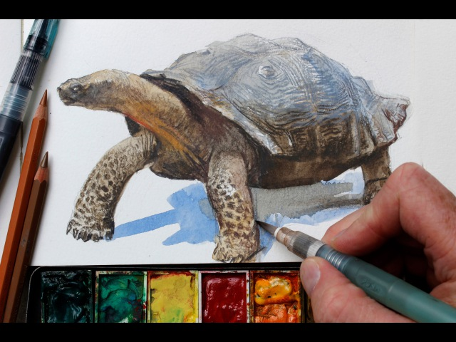 Watercolor Colored Pencils = Fast Realistic Textures