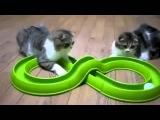 Самые смешные видео про котов! Веселые и угарные приколы!