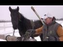 Заездка молодой лошади в сани - первый раз запрягли.
