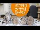 고양이들에게 전기방석을 깔아주다. Cute Cats on an Electric Heating Pad. 猫たちに電機座布団を敷123