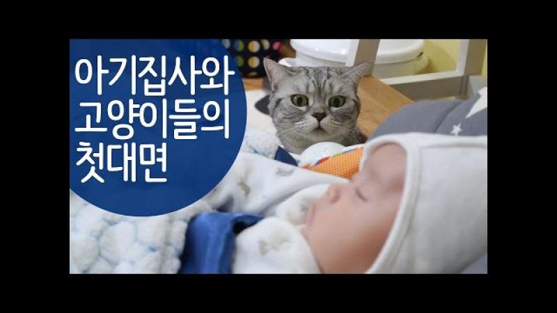 귀여운 아기와 고양이들의 첫만남 Cats' First Encounter with a Baby 赤ちゃんと猫たちの初の出202