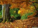 Richard Clayderman - Autumn Leaves
