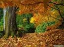 Richard Clayderman Autumn Leaves