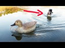 Why are you following me?  (RC Duck boat)