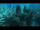 Грёзы Кораллового моря: Пробуждение | Coral Sea Dreaming: Awaken (2009)