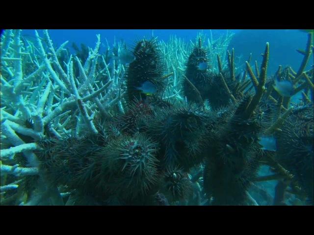 Грёзы Кораллового моря: Пробуждение   Coral Sea Dreaming: Awaken (2009)