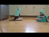 Робот-пылесос-тройная польза: ребенок и кот увлечены и дома чисто)))