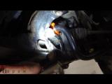 Suzuki Grand Vitara замена втулок переднего стабилизатора
