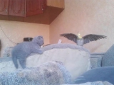 Мой кот и попугай знакомятся!