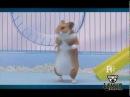 Хомяк отжигает Hamster annealed Lemur TV