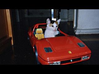 Cats Riding RC Car Compilation